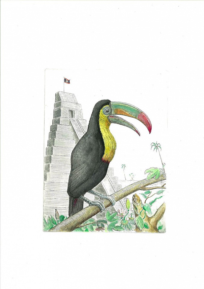 Bjorn Skaarup ,   Toucan, Belize, Edition of 50  ,  2016     Color engraved etching ,  19 3/4 x 6 1/8 in. (50.2 x 15.6 cm)     BS170214
