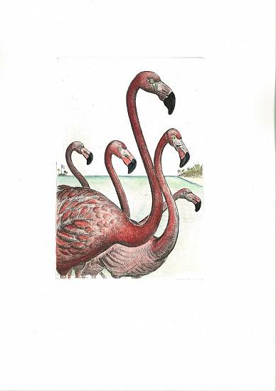 Bjorn Skaarup, American Flamingo, Bahama 2016, Color engraved etching