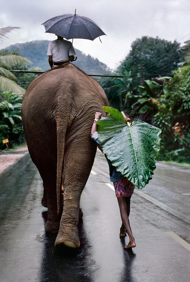 Steve McCurry ,   Young Man walks behind Elephant, Sri Lanka  ,  1995     FujiFlex Crystal Archive Print ,  40 x 30 in.     SRILANKA-10075NF2