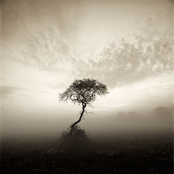 Michael Kahn ,   Serengeti Nantucket, Edition of 50      silver gelatin photograph ,  14 x 14 in. (35.6 x 35.6 cm)     MK 010908