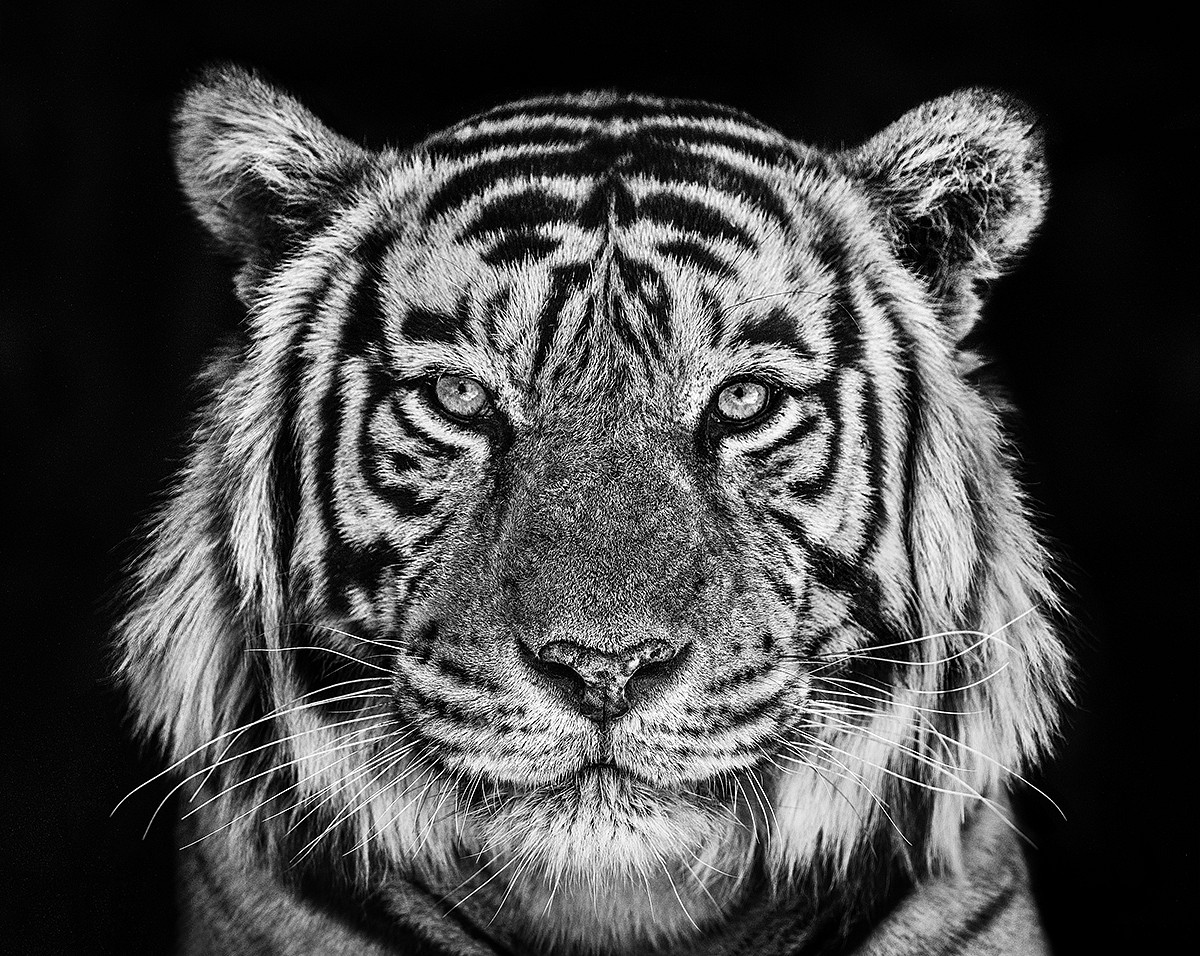 PRESS RELEASE: DAVID YARROW [Coe + Co, Nantucket, MA], Jul  2 - Jul 14, 2019