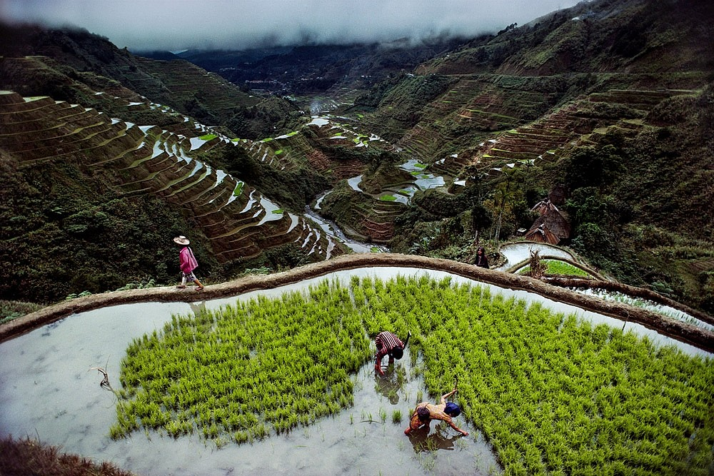 Steve McCurry ,   Banaue Rice Terraces  ,  1985     FujiFlex Crystal Archive Print ,  20 x 24 in. (50.8 x 61 cm)     PHILIPPINES-10001NF2.2015